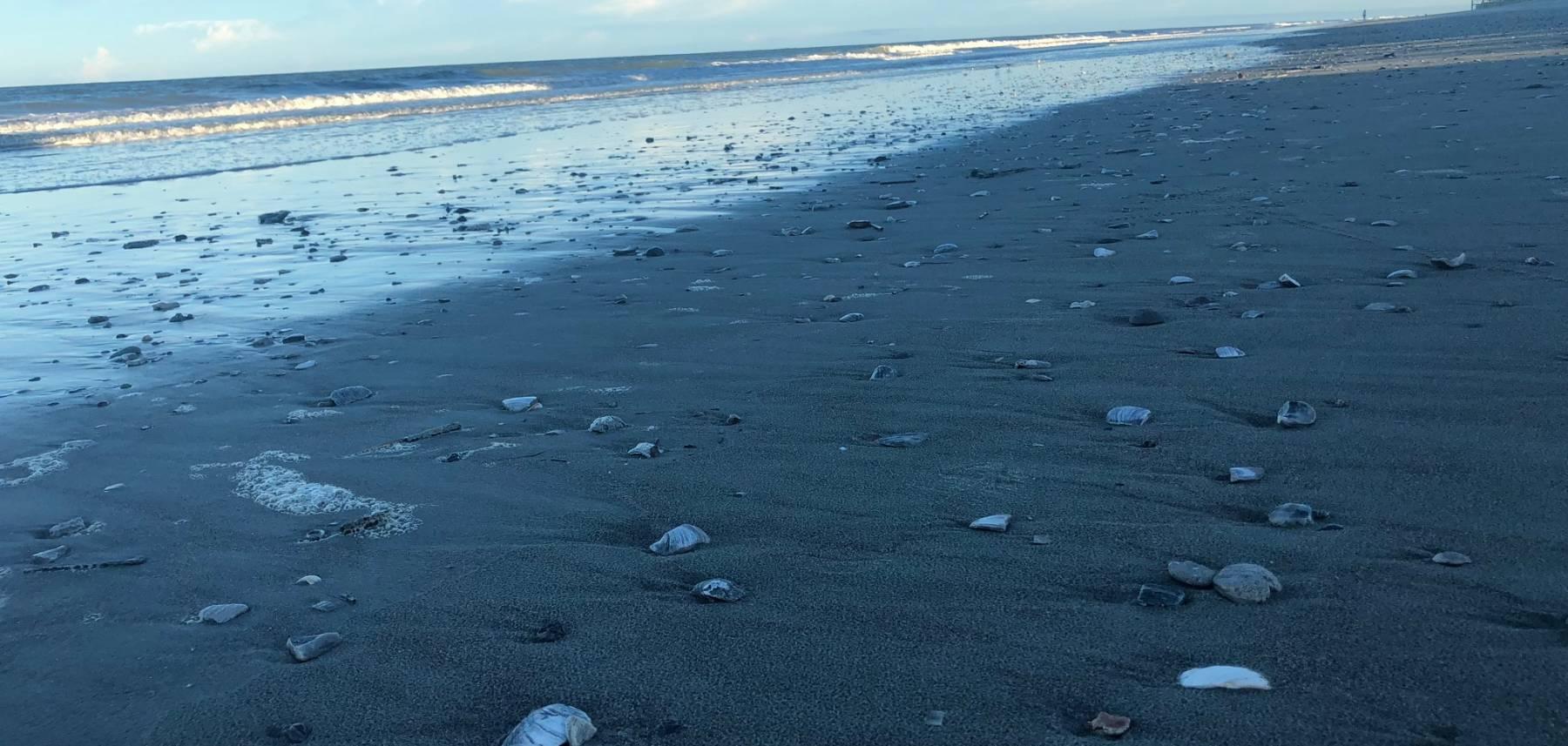 tidelife vacation rentals pawleys island south carolina beach rentals
